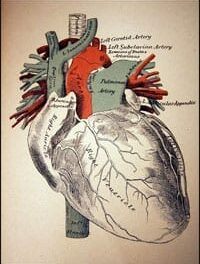 The Pumping Action of the Heart