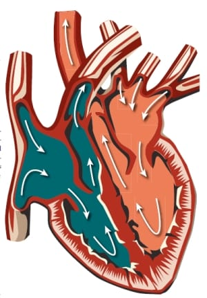 Understanding Vital Signs Medical Devices